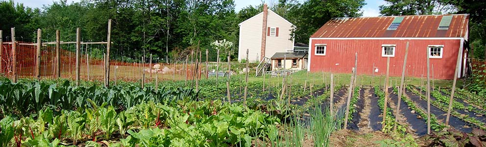 CommTank Lends a Hand at Common Earth Farm