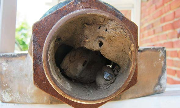 Storage tank vent blocked by wasps